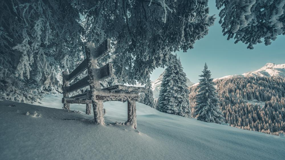 Snowy bench under the trees wallpaper