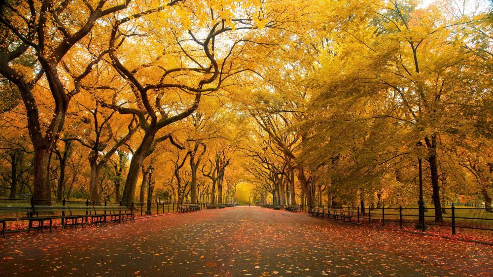 Fall park wallpaper