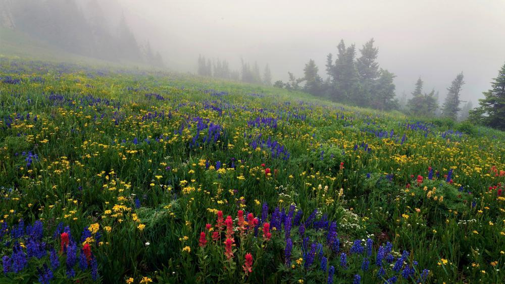 Misty summer hillside wallpaper