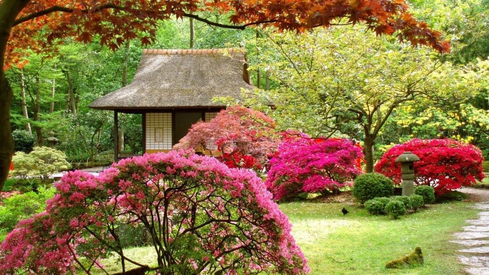 Japanese garden at spring (Clingendael park) wallpaper