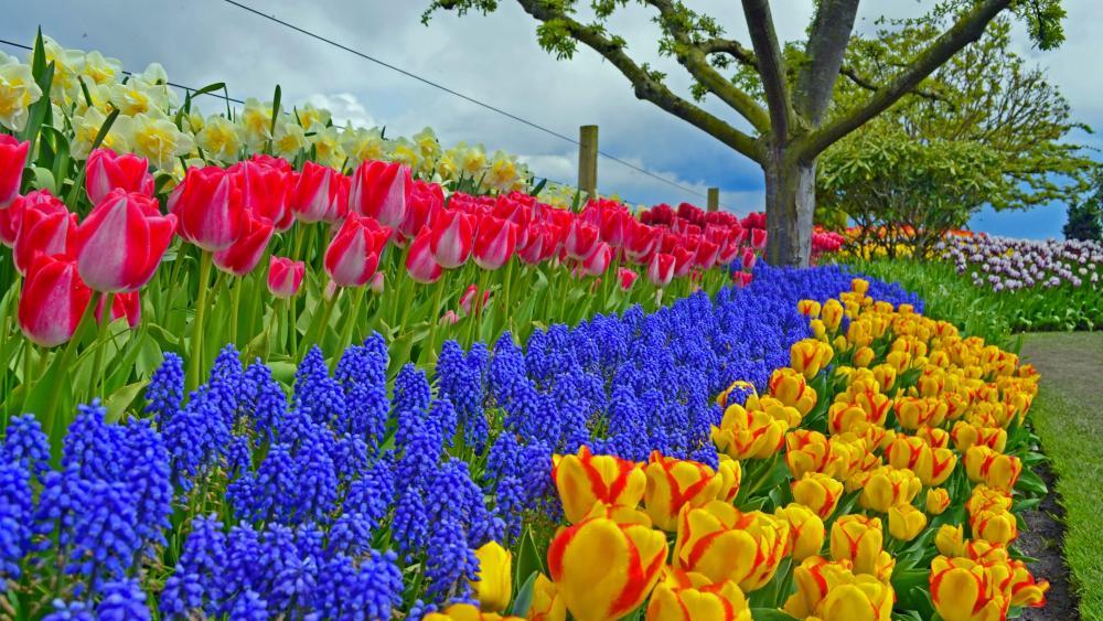 Spring flowers wallpaper