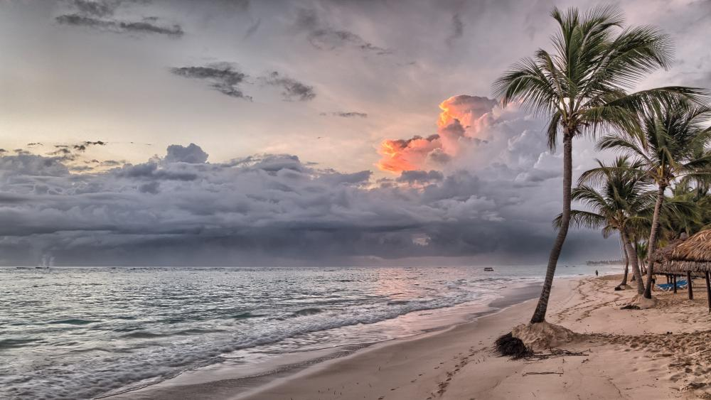 Palms on beach wallpaper
