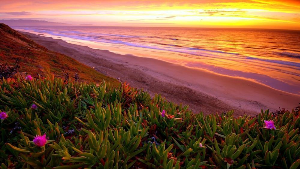 Seashore Plants On Beach wallpaper