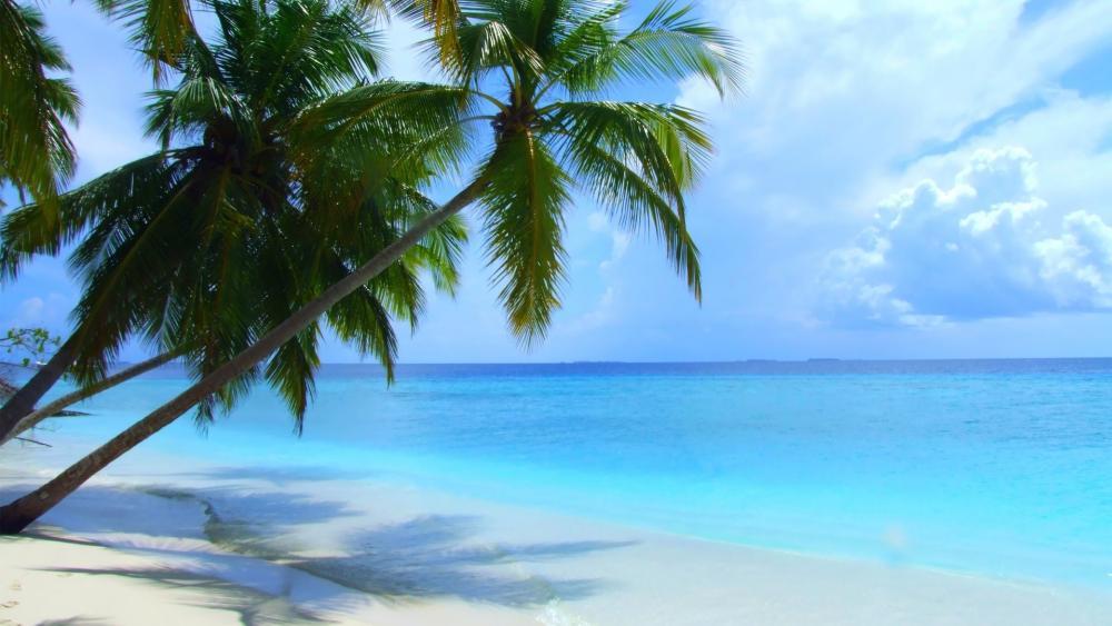 Maldives tropical beach wallpaper
