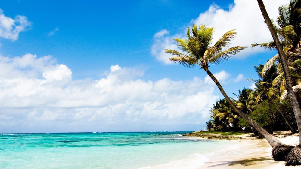 Caribbean beach wallpaper