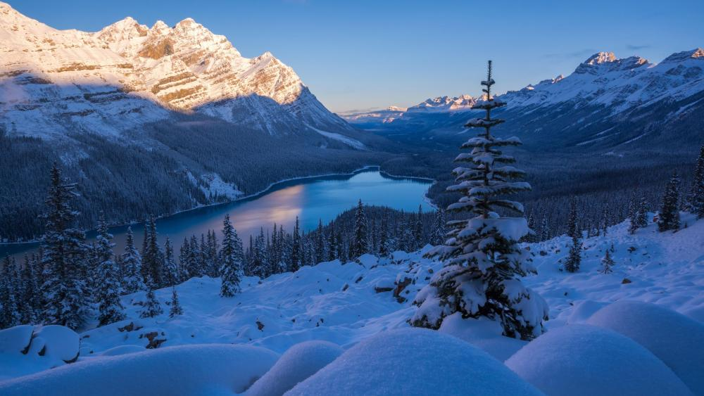 Peyto Lake (Banff National Park) wallpaper