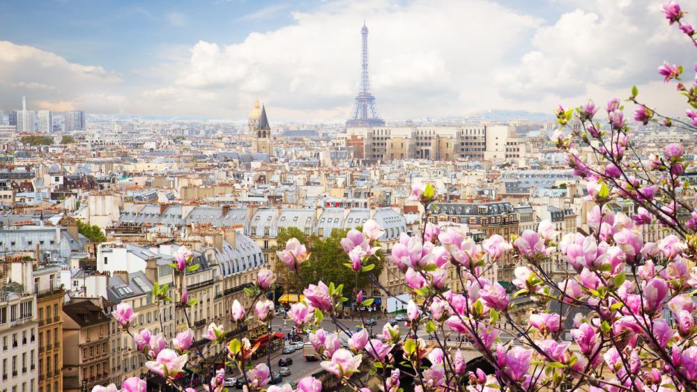 Paris landscape with Magnolia flowers wallpaper
