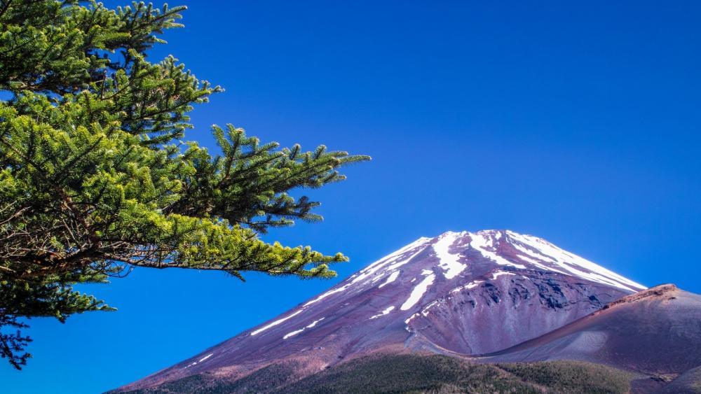 Mt. Fuji from Mizugatsuka Park wallpaper