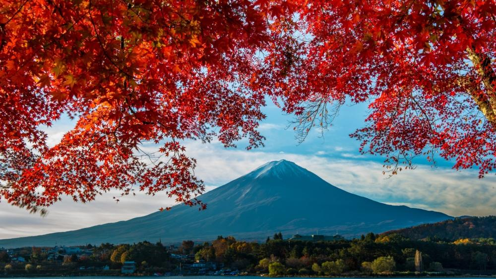 Mount Fuji with red mapple leaves wallpaper