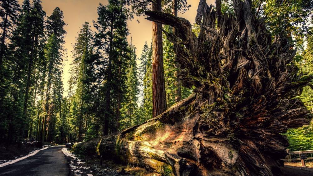 fallen tree wallpaper