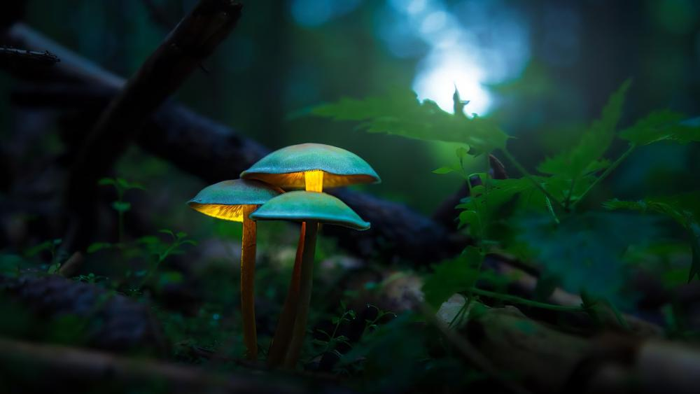 Illuminated mushrooms wallpaper