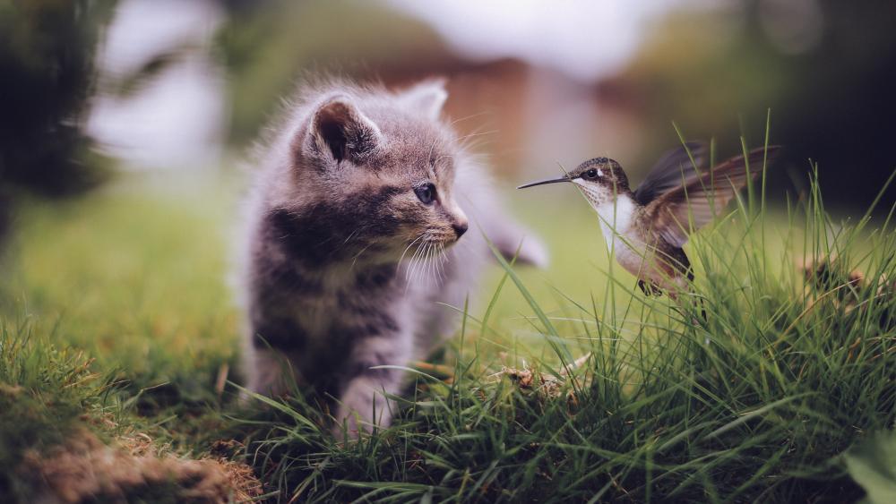 Cat and colibri wallpaper