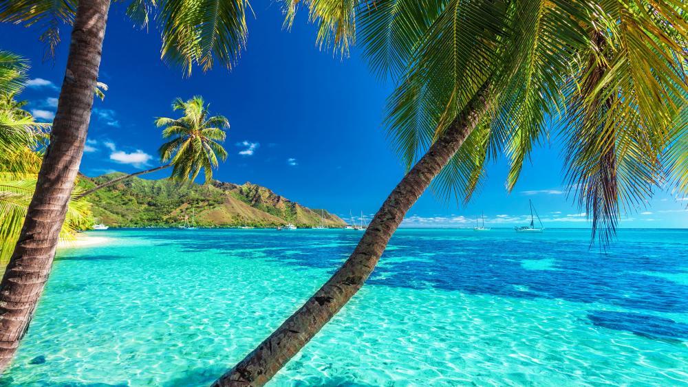 Moorea, Tahiti island wallpaper