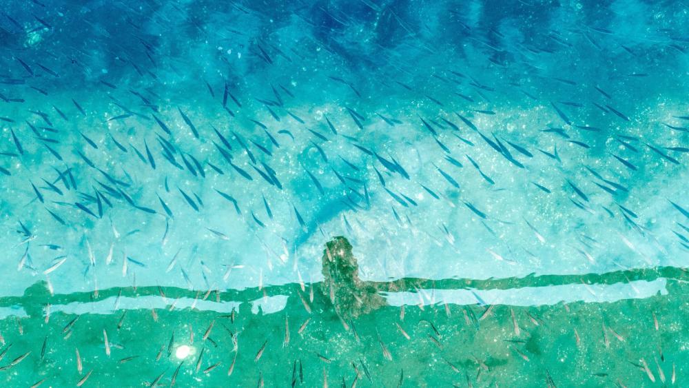 Water reflection art wallpaper