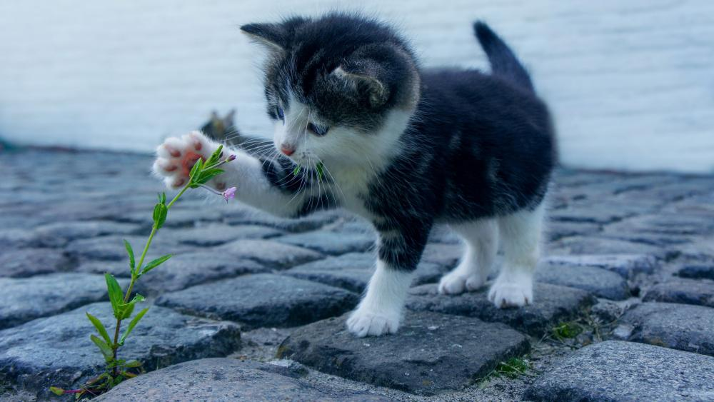 Kitten plays with a flower wallpaper