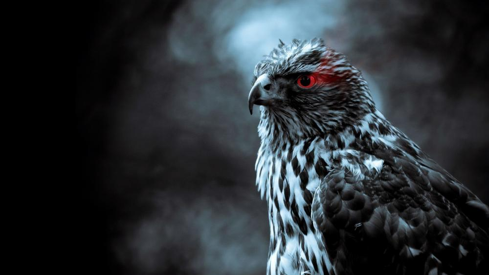 Red eye Eagle wallpaper