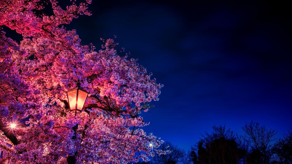 Cherry blossom in the street light wallpaper