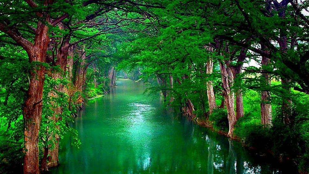 Tree water wallpaper