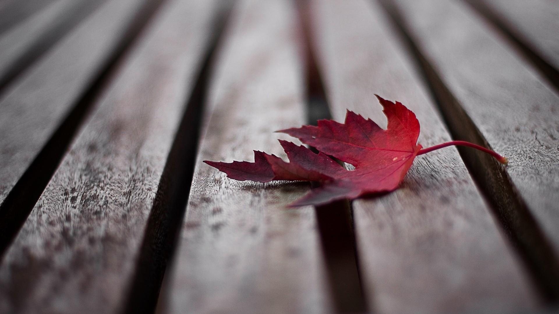 Fallen leaf wallpaper
