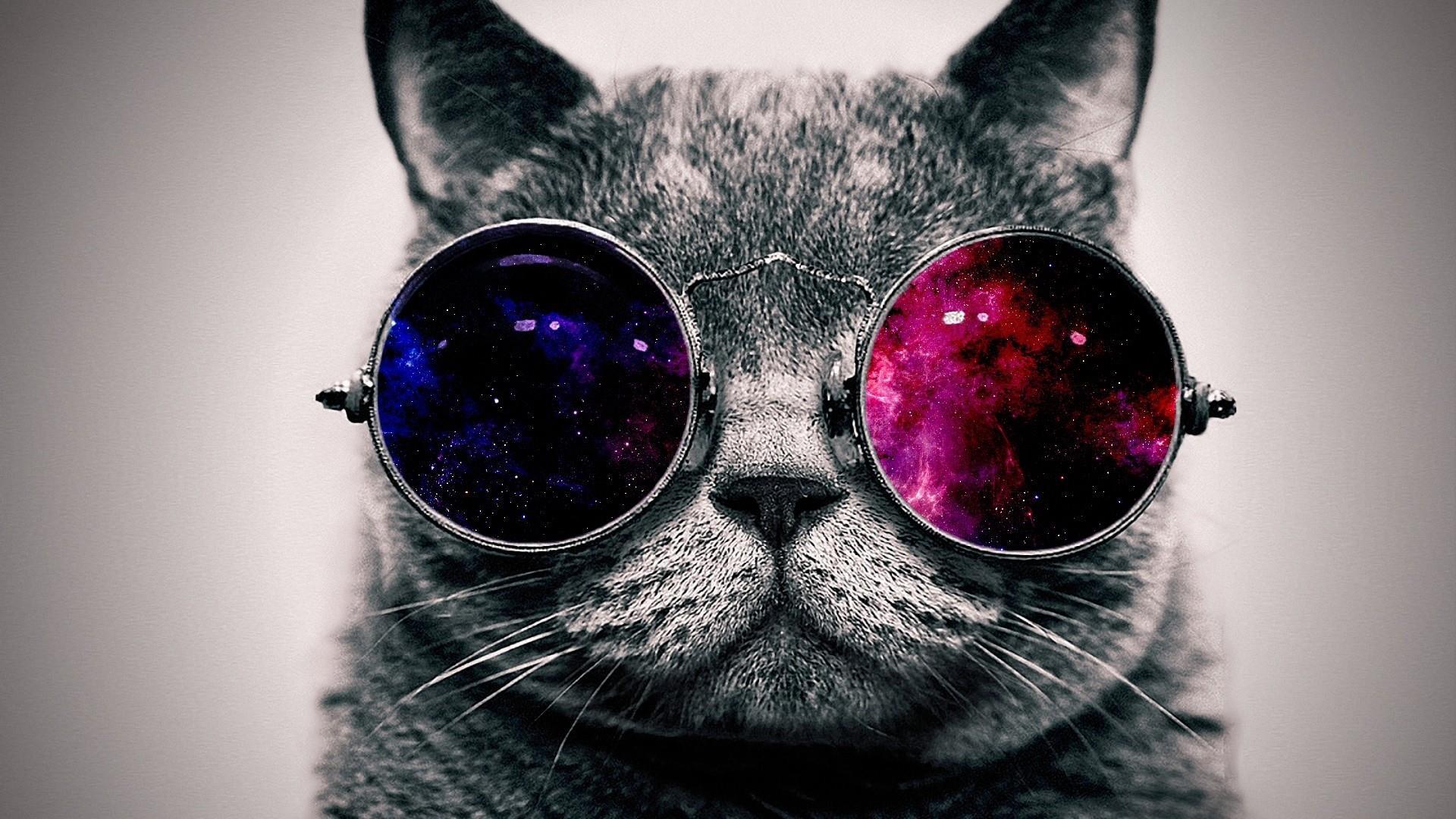 Funny cat in sunglasses wallpaper