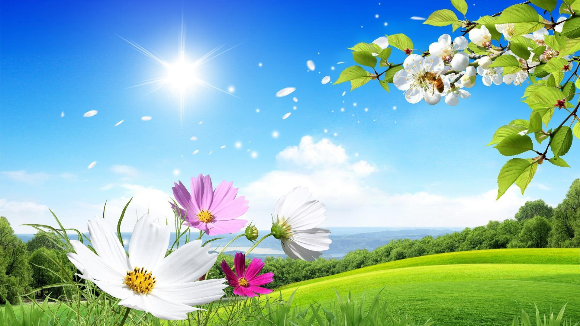 Spring in the meadow    wallpaper