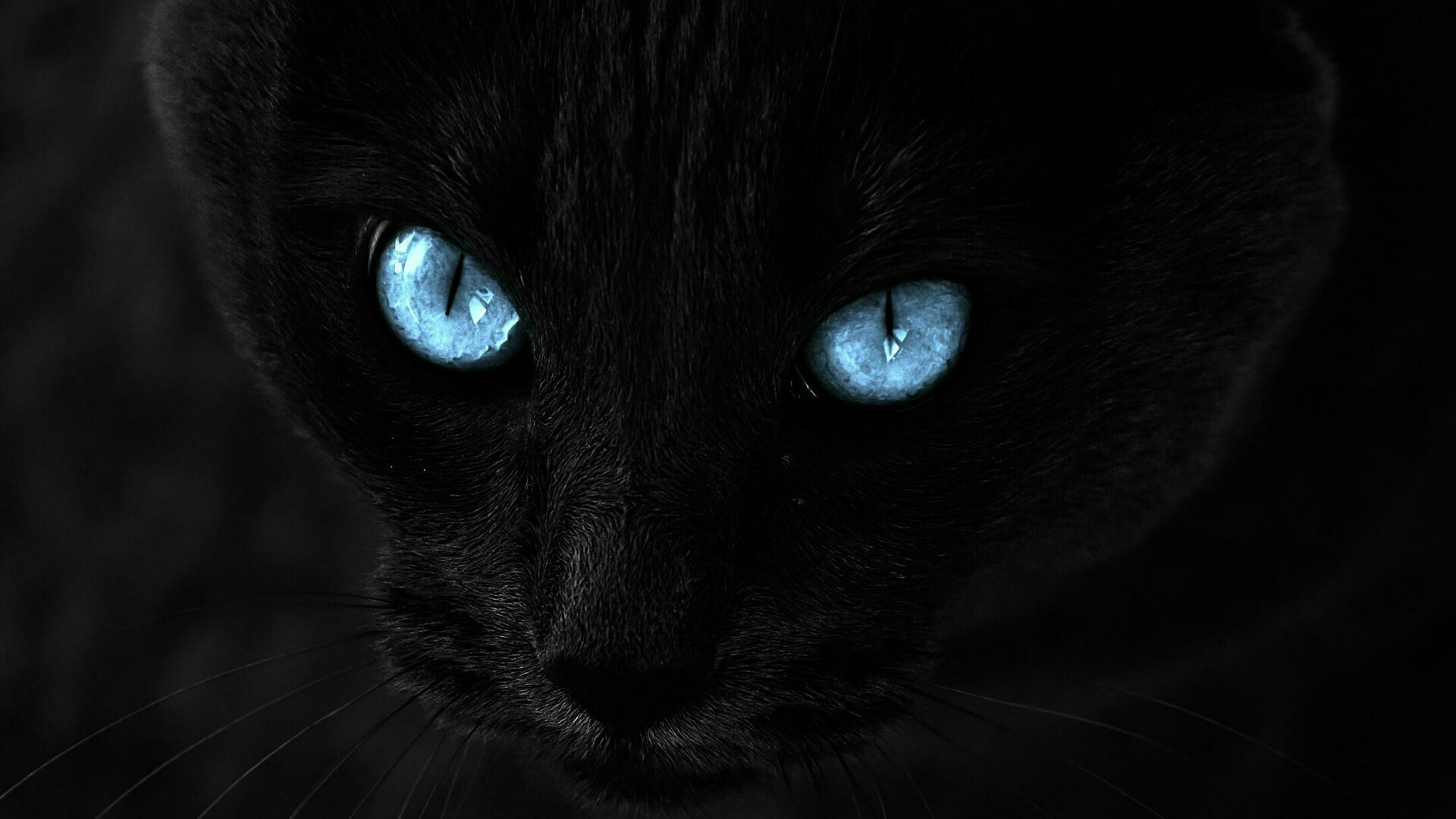 Black cat with blue eyes wallpaper