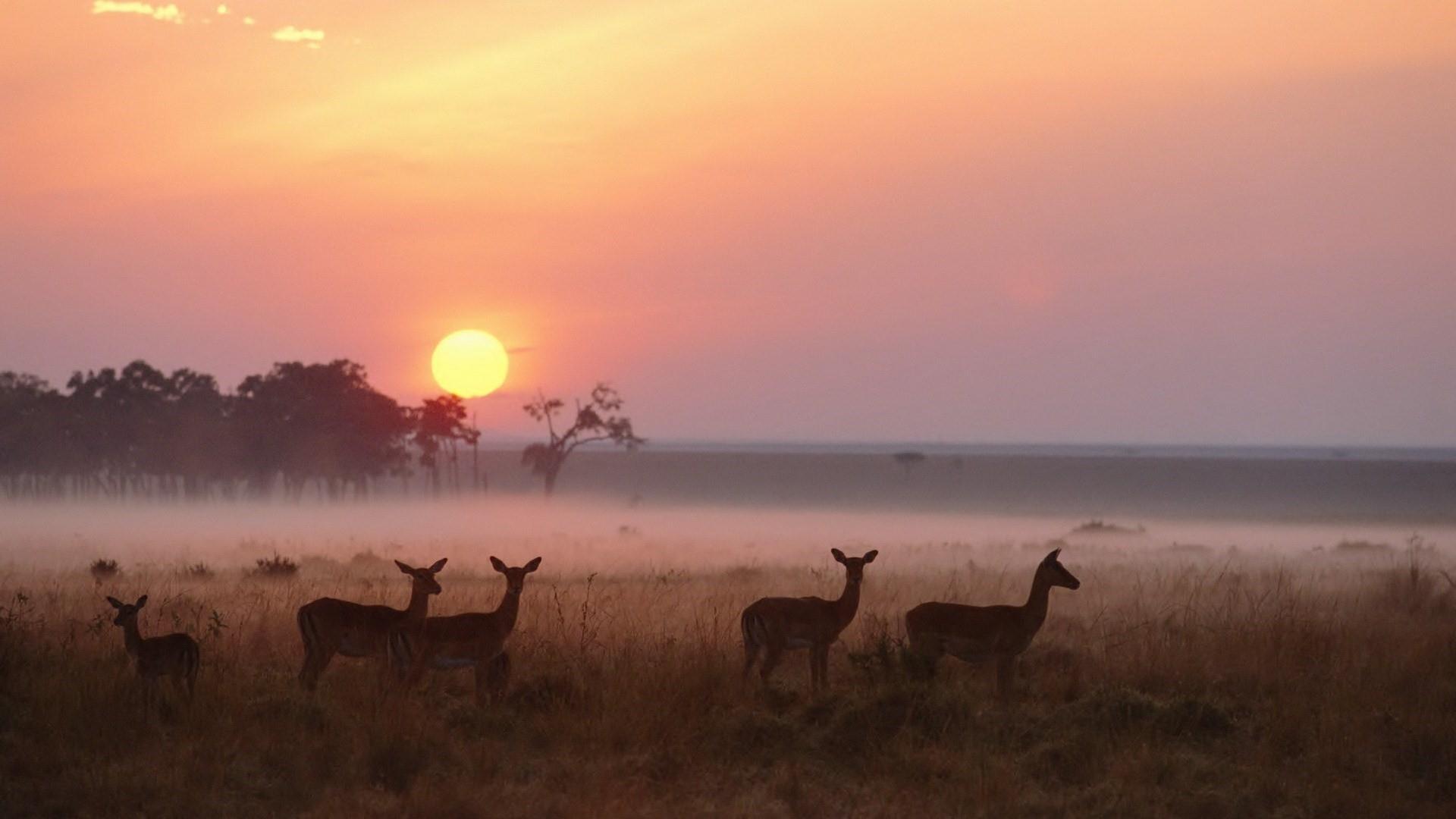 Sunrise over Maasai Mara National Reserve, Kenya wallpaper