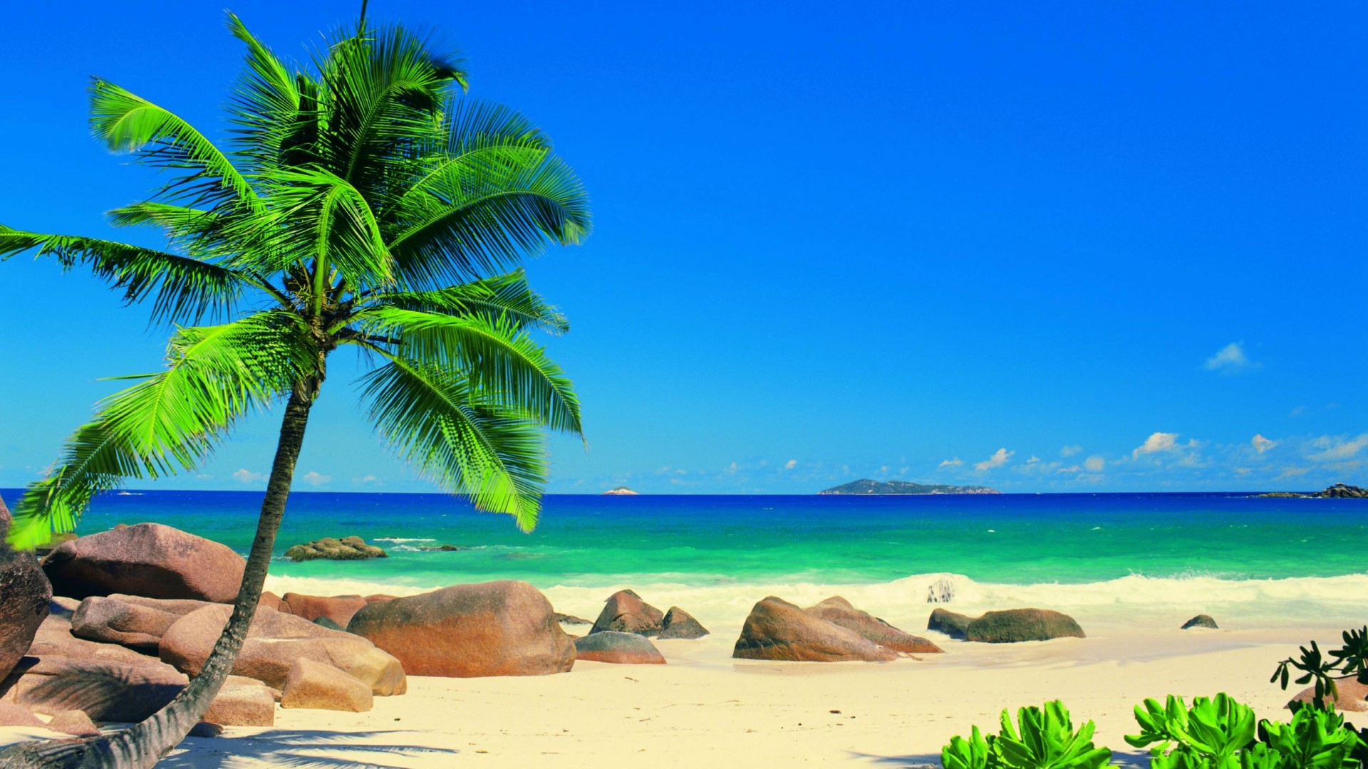 Seychelles - Exotic beach with palm tree  wallpaper