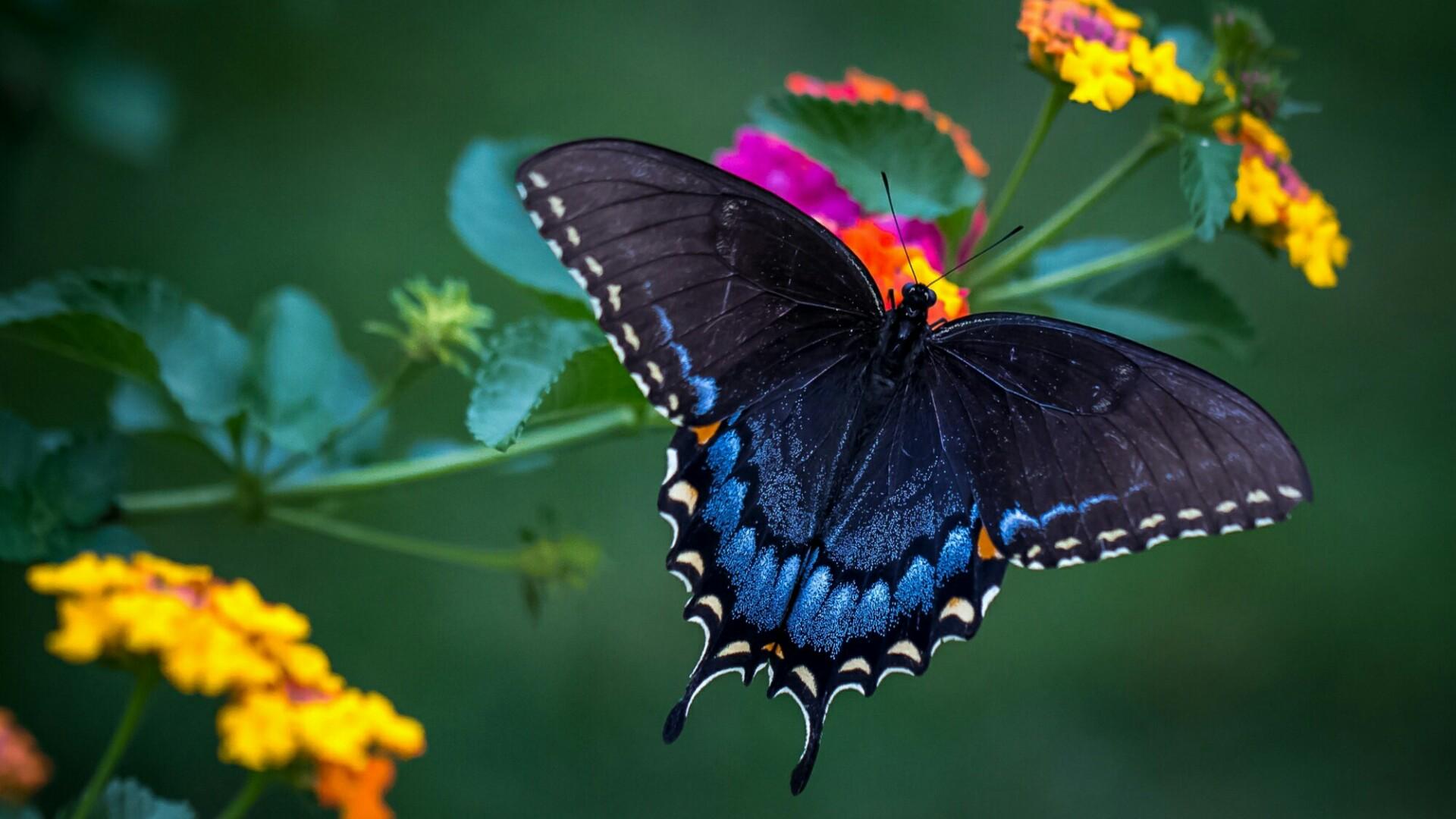 Wonderful butterfly macro photo wallpaper