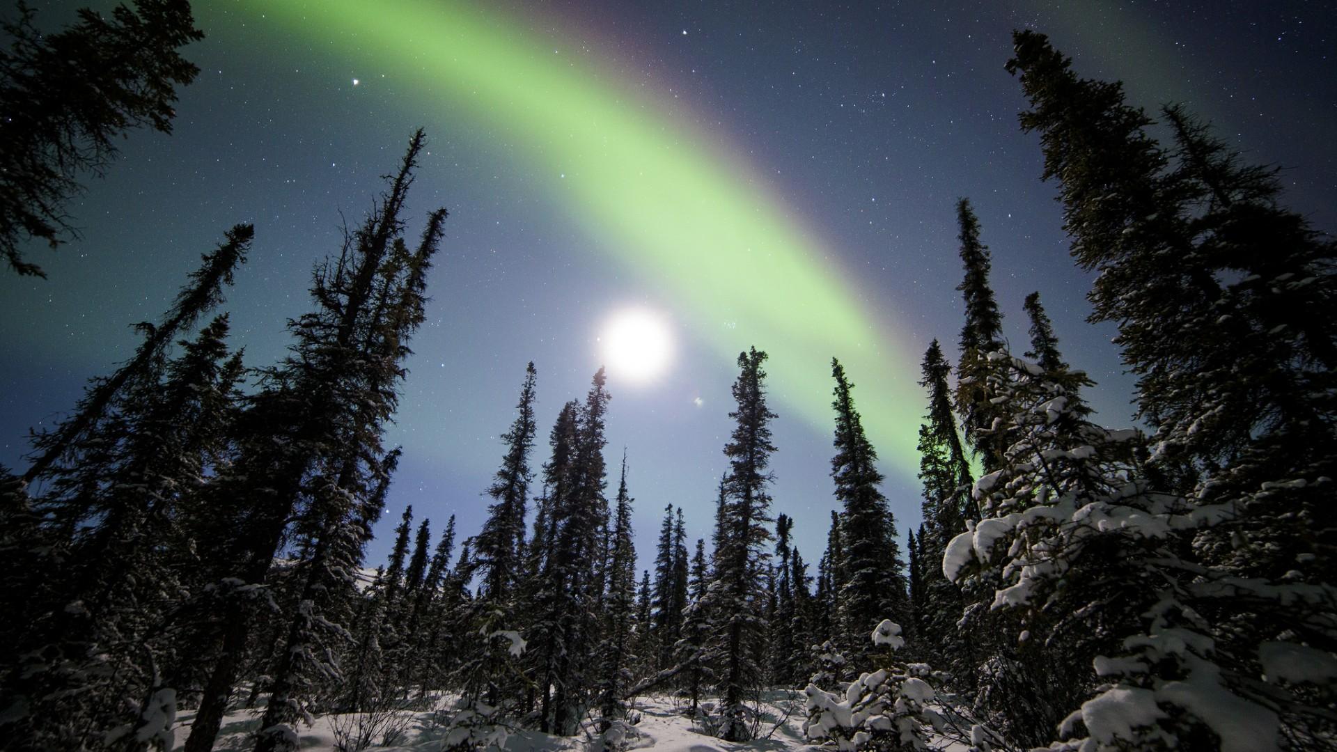 Aurora Borealis above Denali National Park - Alaska wallpaper