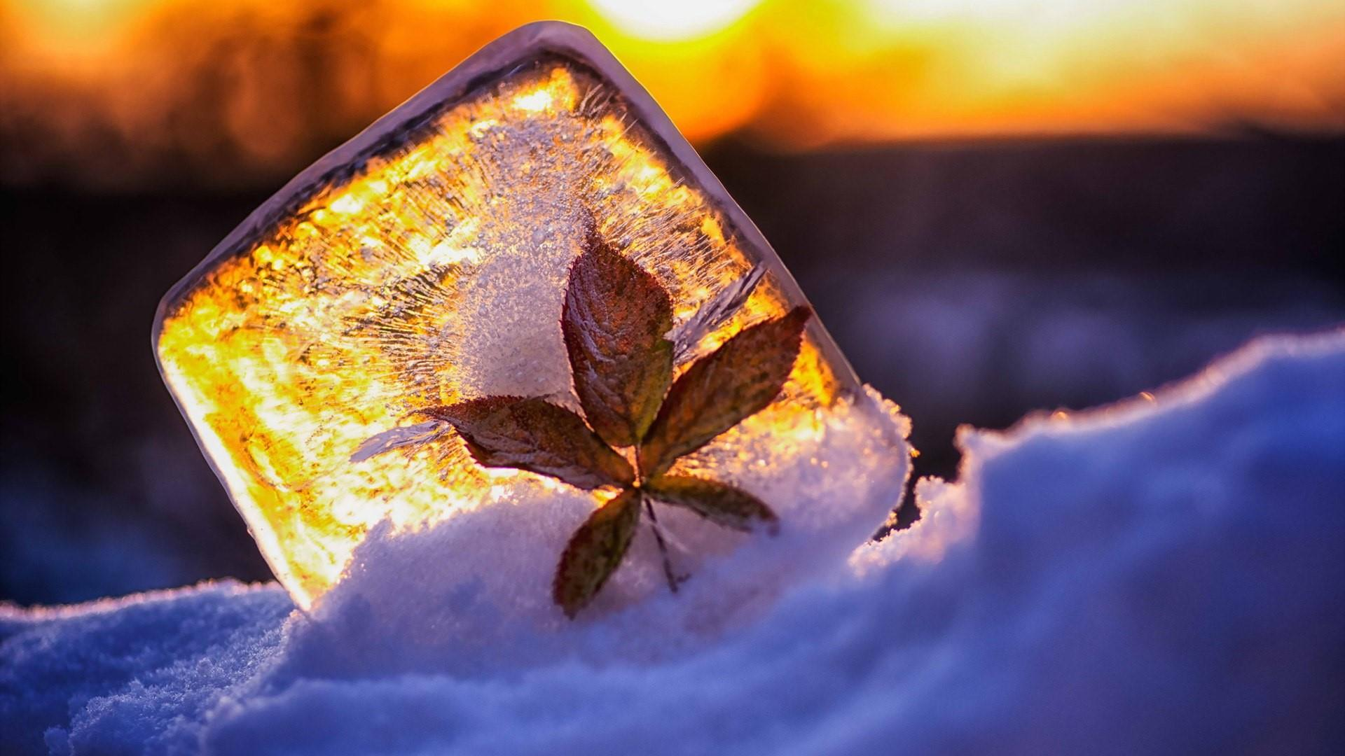 Frozen leaf on the ice wallpaper