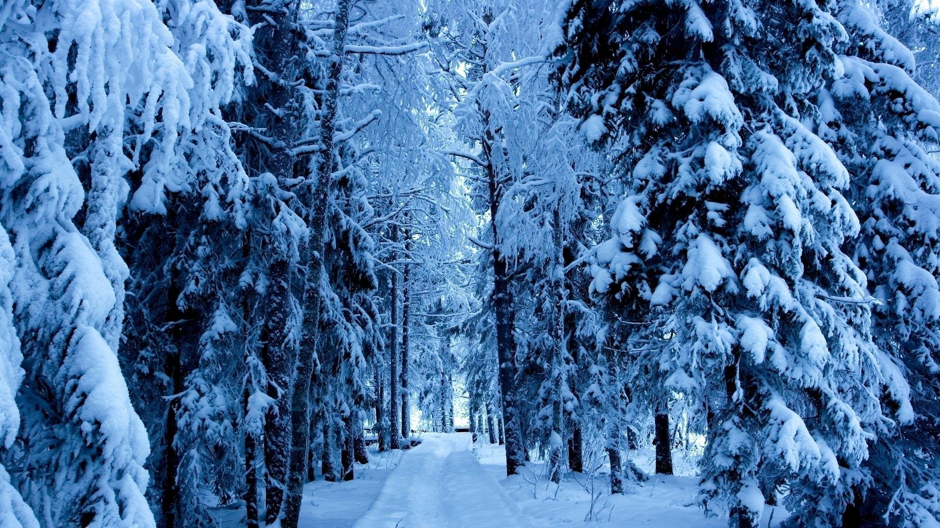 Winter path wallpaper