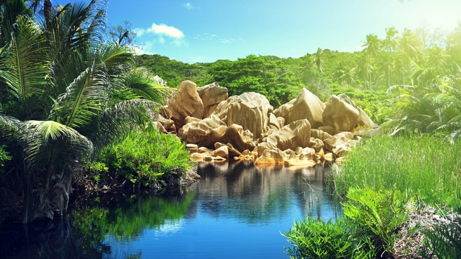 Lake in the jungle (La Digue, Seychelles) wallpaper