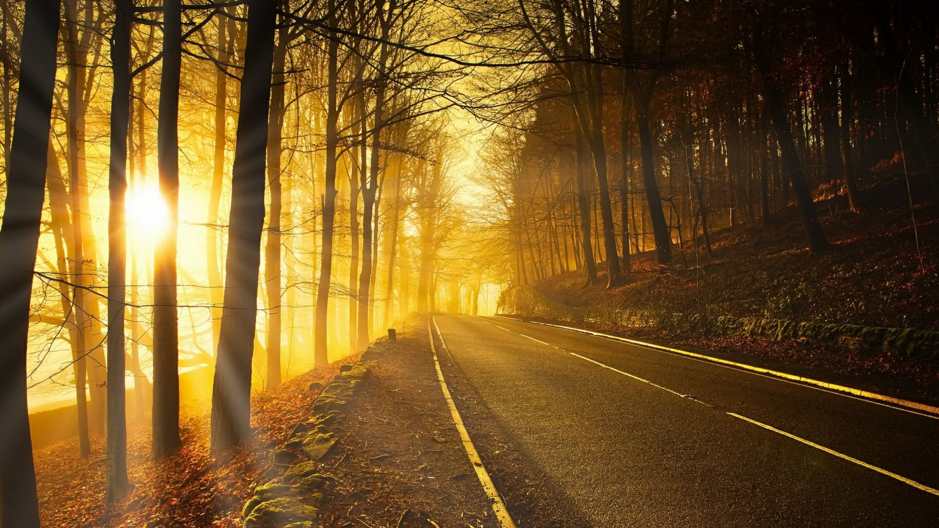 Forest road in the autumn sunlight wallpaper