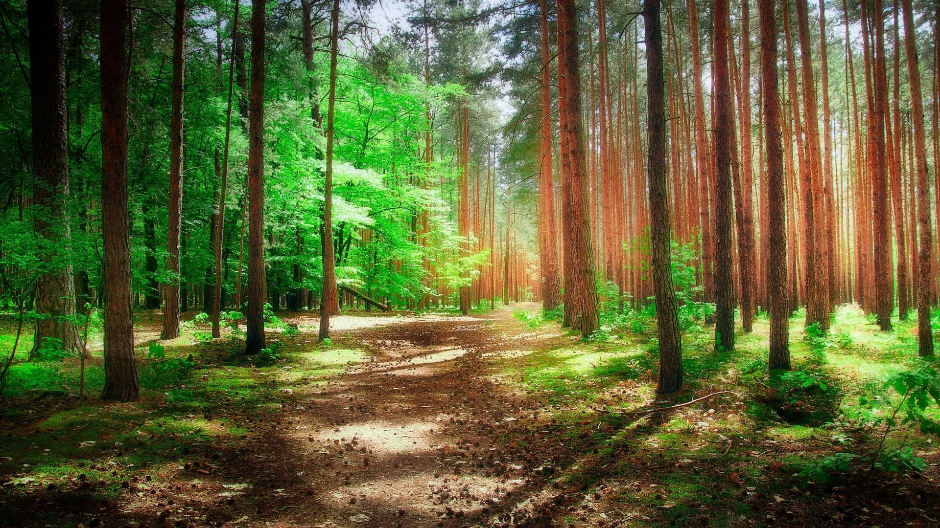 Sunshine in the woods wallpaper