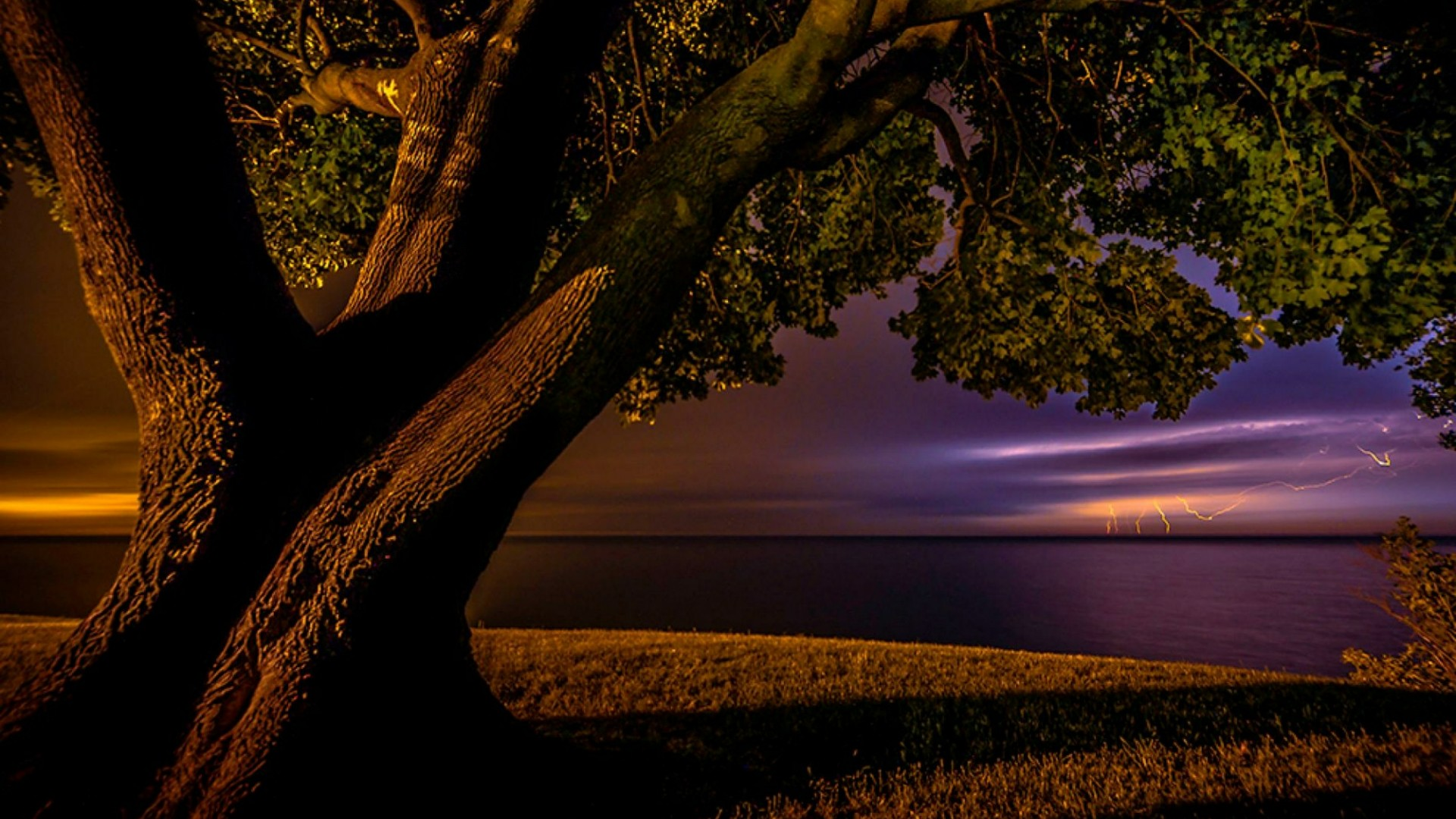 Lone tree in the storm - Lake Ontario wallpaper