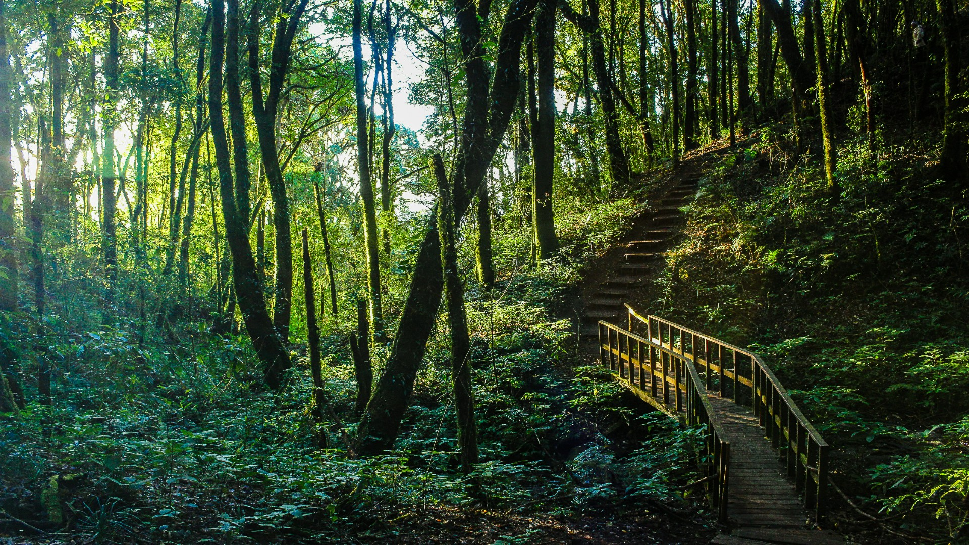 Stairs in the forest wallpaper