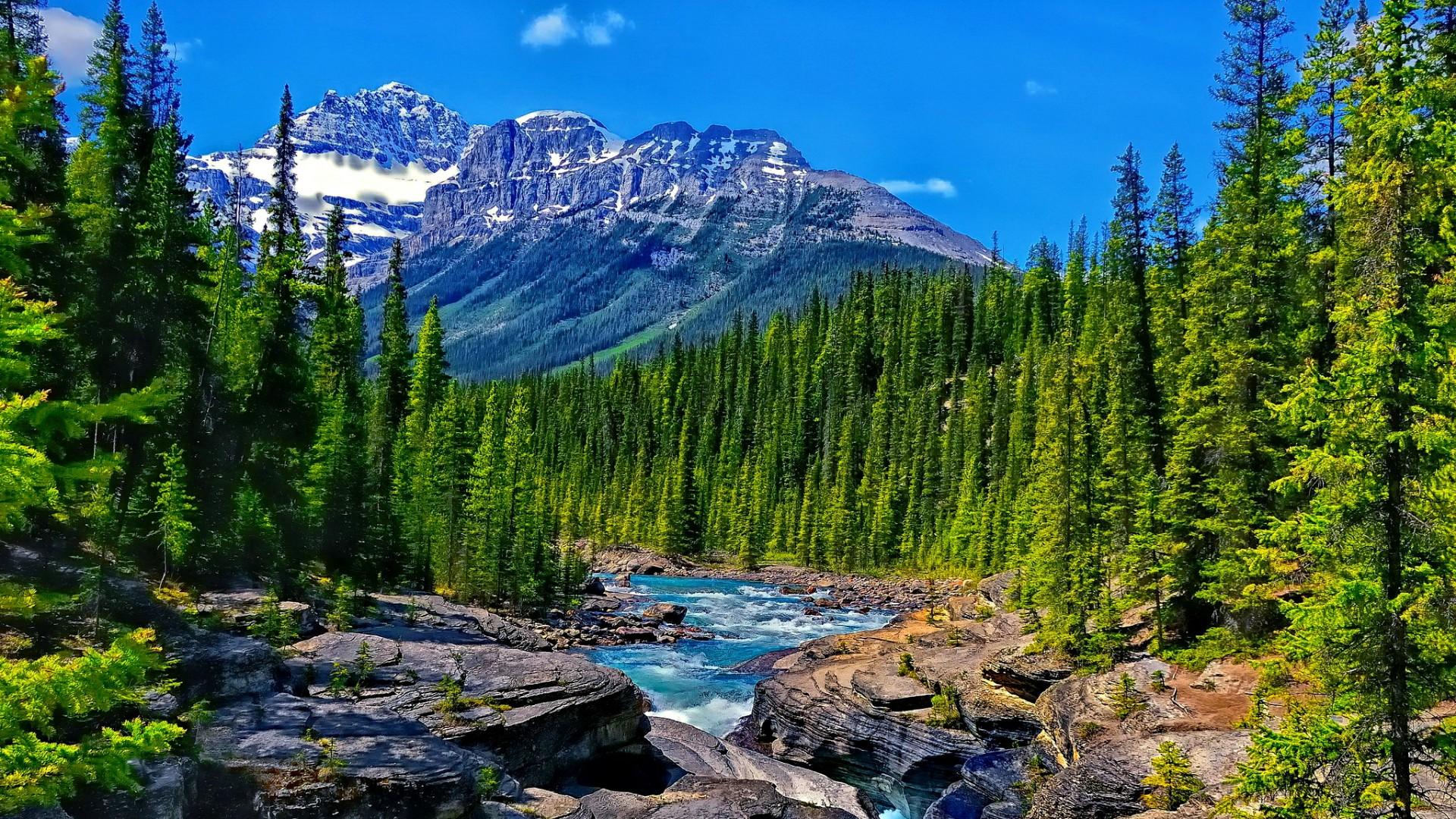 Mistaya River (Banff National Park, Alberta) wallpaper