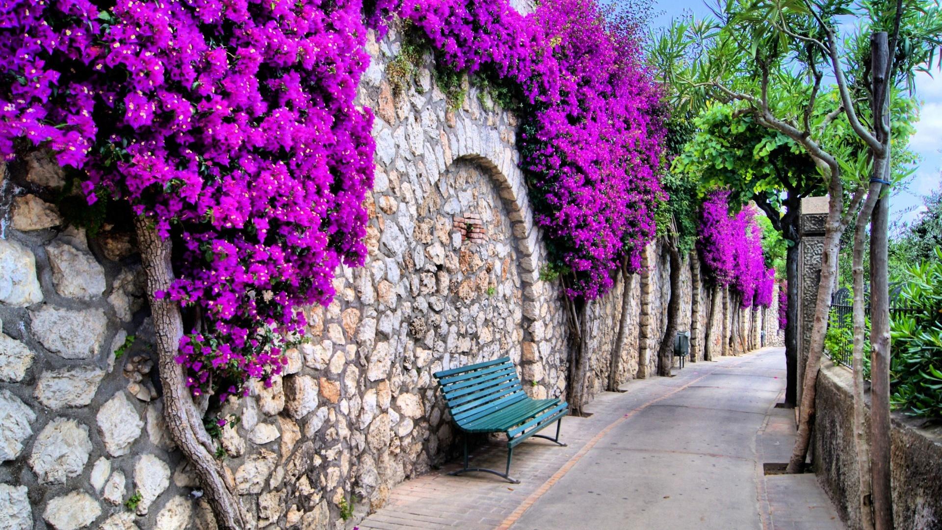Pathway bench in Capri wallpaper