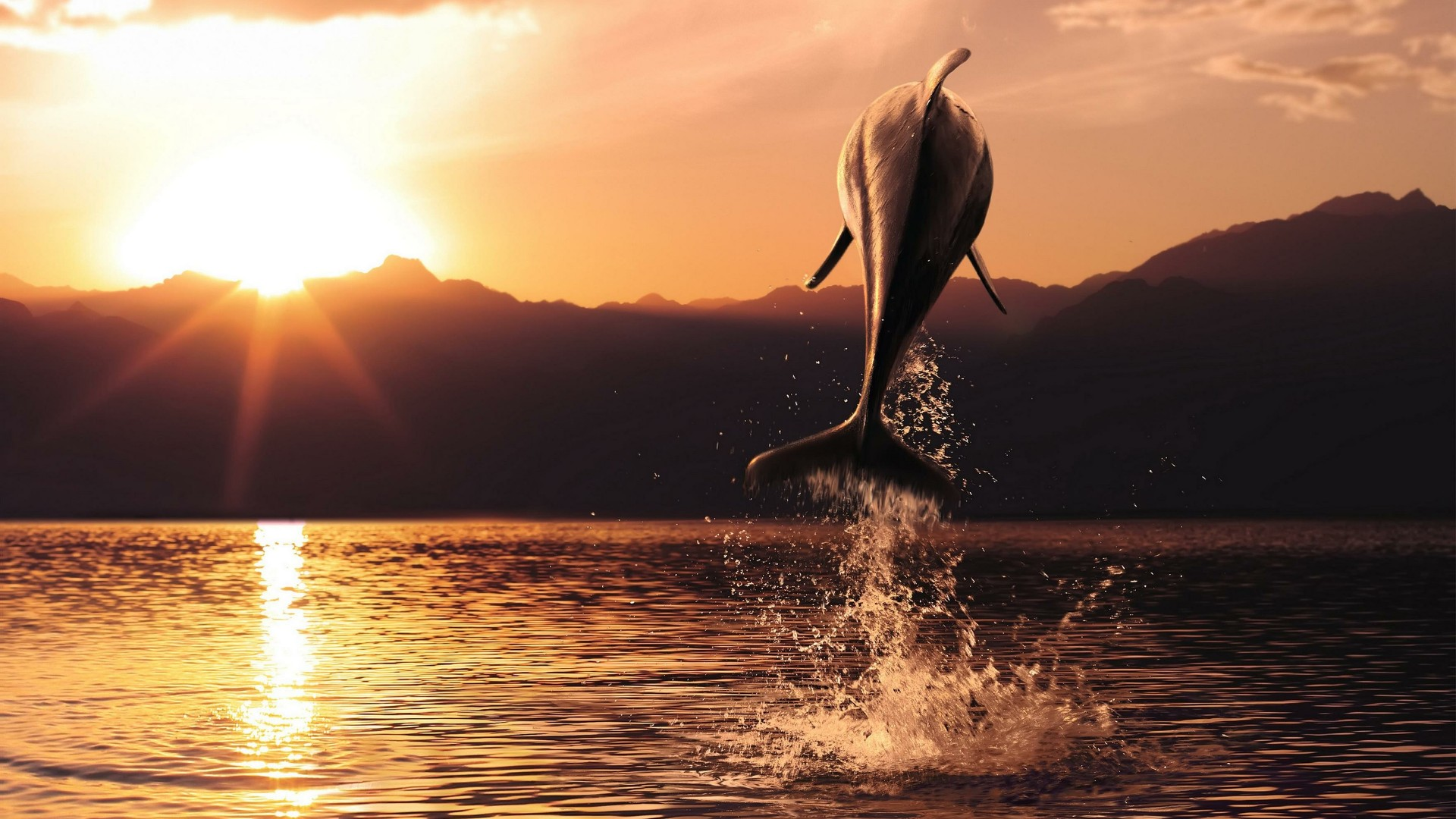 Dolphin in the sunset wallpaper