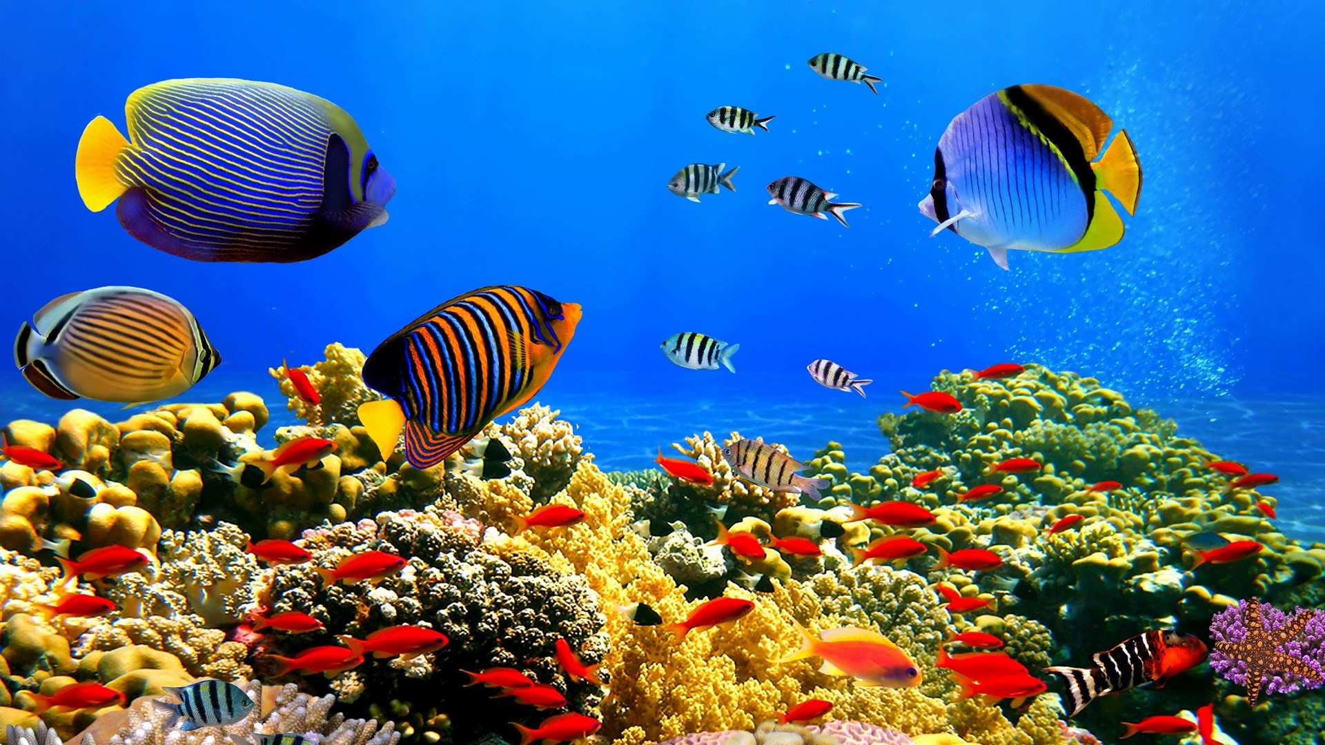Colorful fishes wallpaper