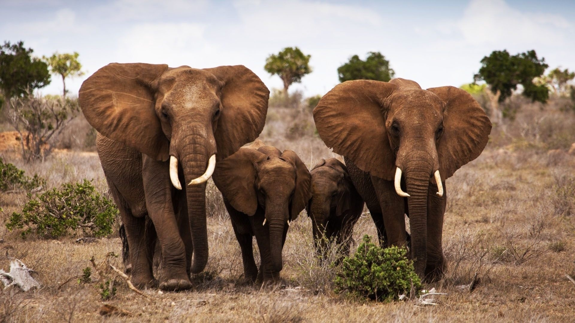 Elephant family wallpaper