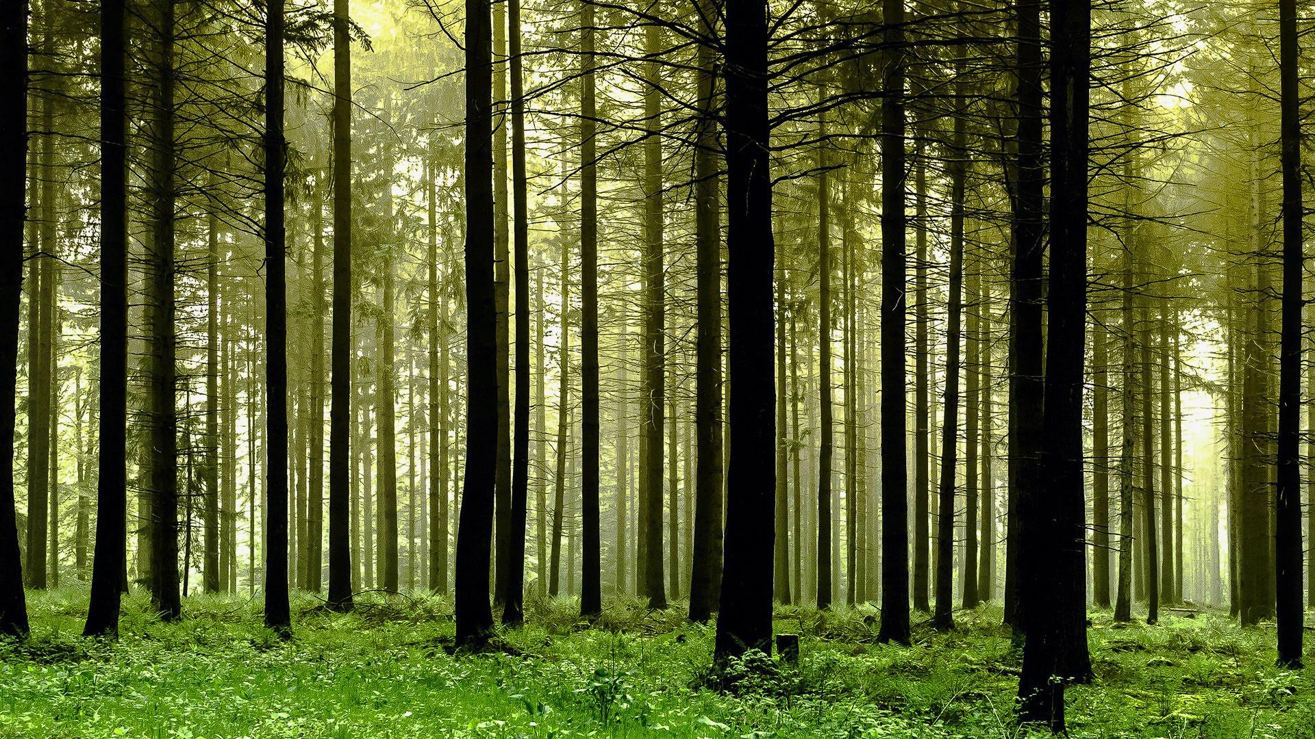Evergreen grove wallpaper