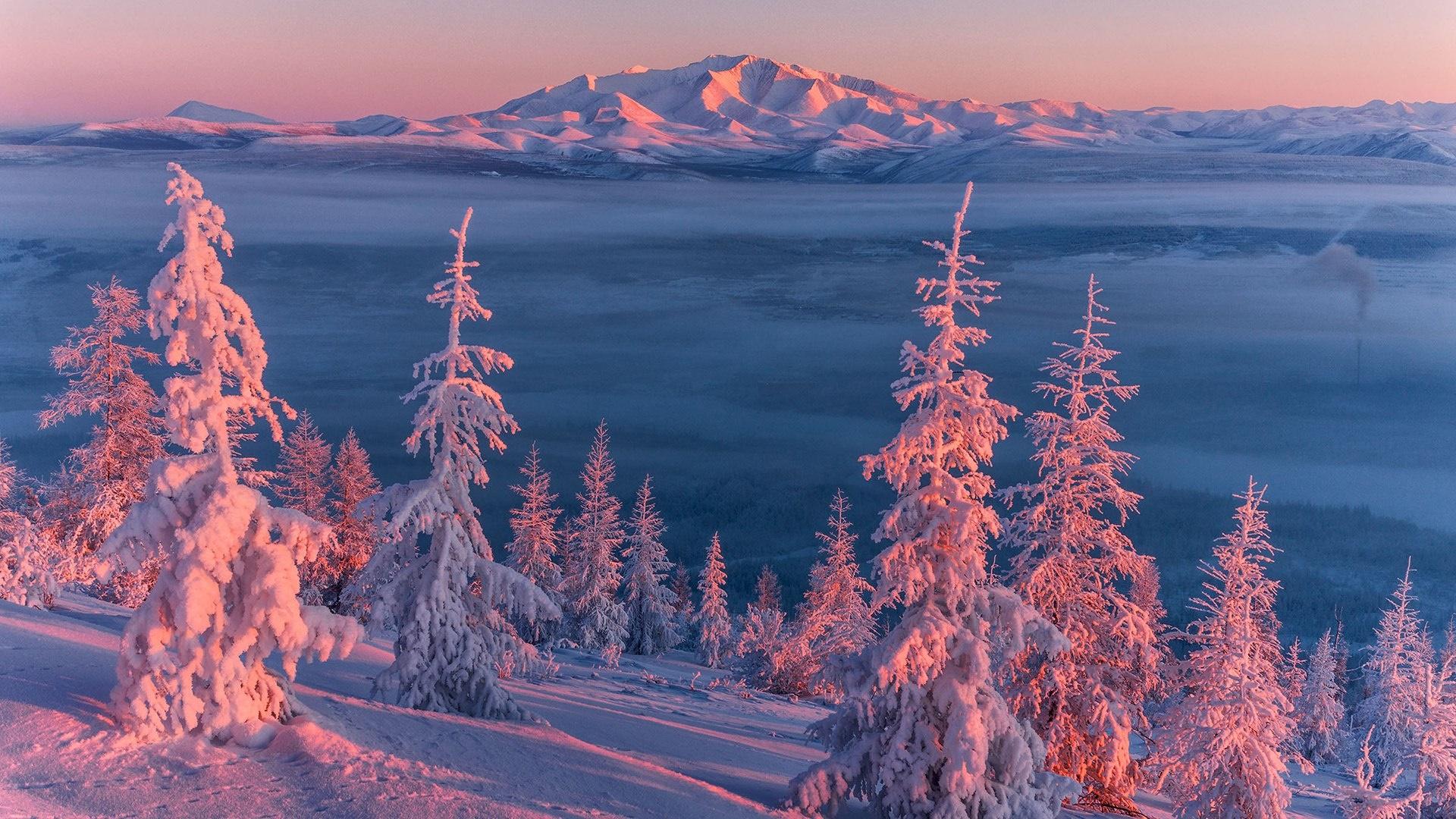 Pink winter landscape wallpaper