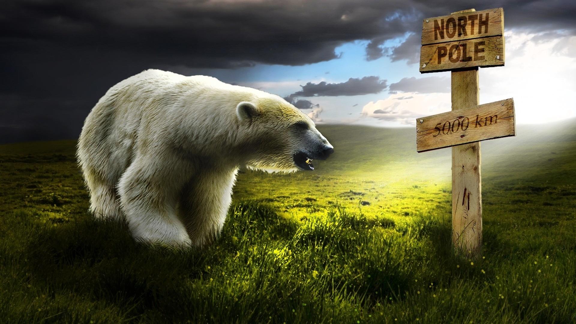 Far from North Pole wallpaper