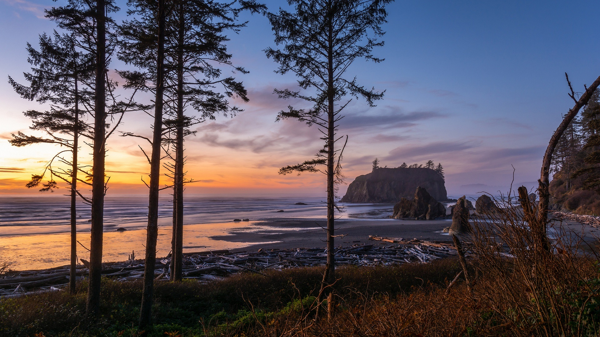 Pine trees of Ruby Beach (Olympic National Park) wallpaper