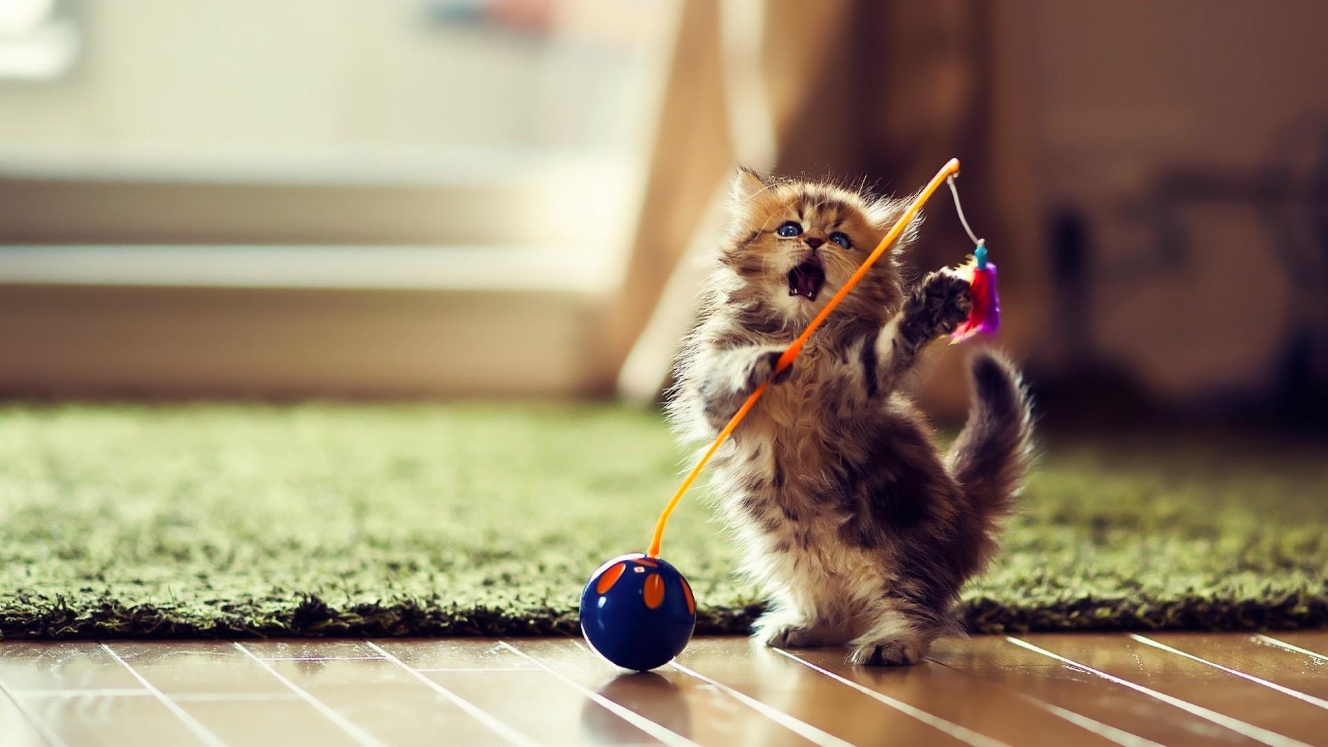 Cute playful kitten wallpaper