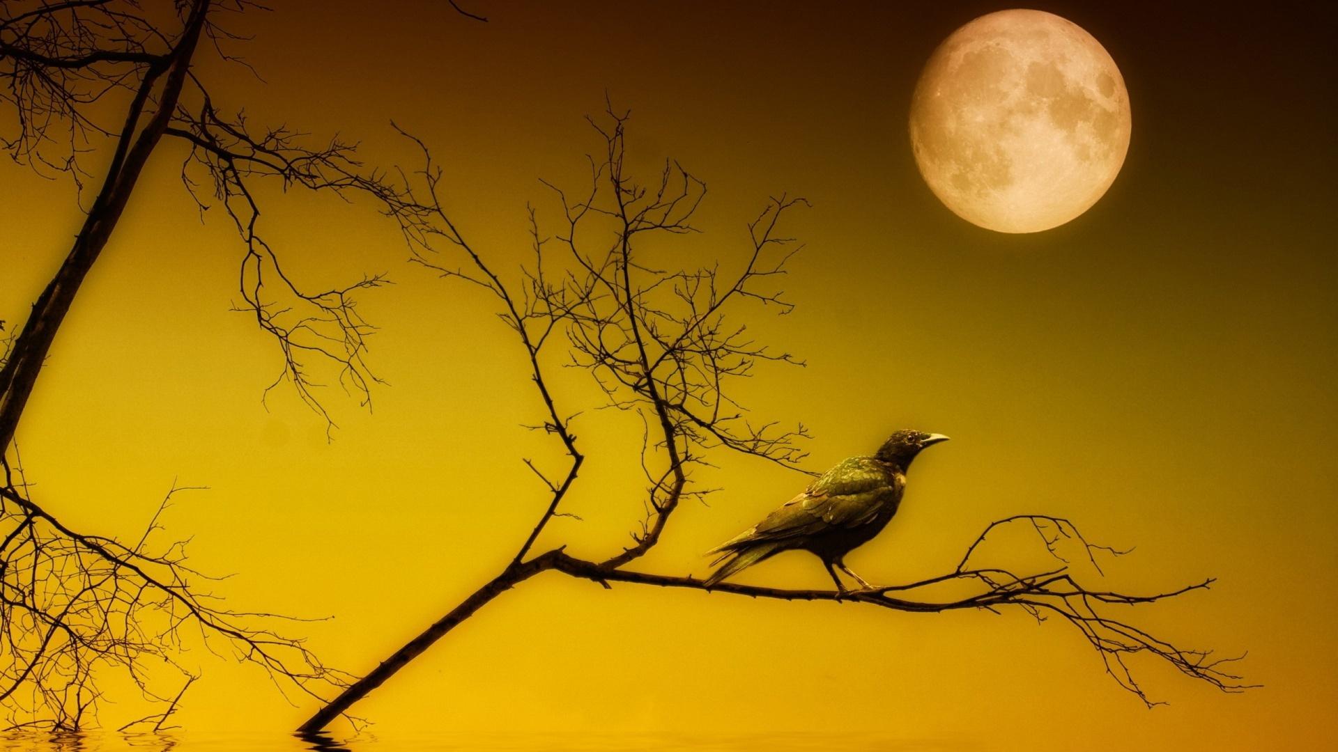 Crow at full moon wallpaper