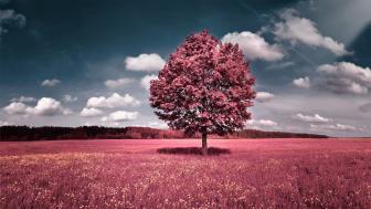 Pink tee wallpaper