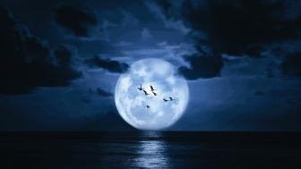Flying birds at full moon wallpaper
